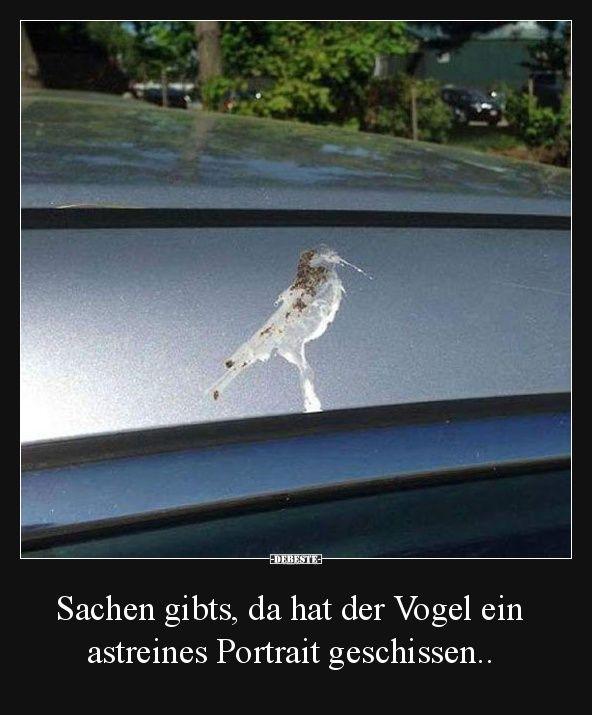 Sachen gibts, da hat der Vogel ein astreines Portrait geschissen.. | Lustige Bilder, Sprüche, Witze, echt lustig