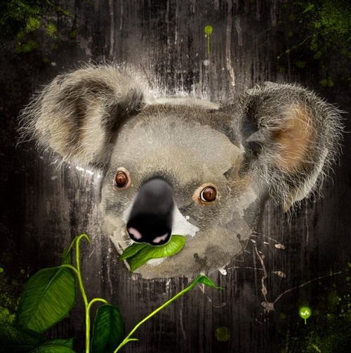 digital koala pic - Google Search