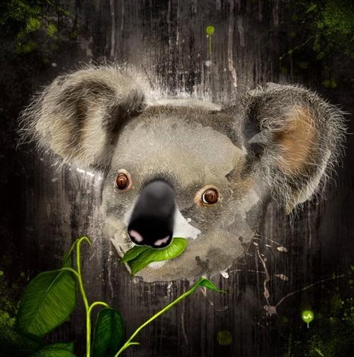 digital koala pic - Google Search