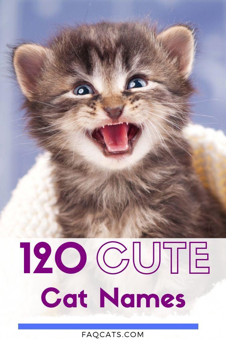 Adorable Unisex Cat Names In 2020 Cute Cat Names Cat Names Girl Unique Kitten Names Boy
