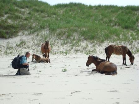 Roberto Dutesco's magical shoot on Sable Island