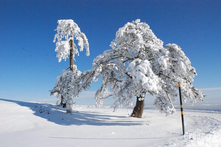 Vasilitsa, Northen Greece