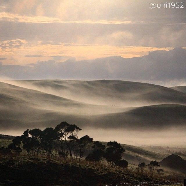 Well @uni1952 has captured a lovely image of rolling mist over the landscape of Redpa, North West Tasmania. Love seeing images from the North of the State, thanks for sharing this with #instatassie Eunice!  Selected by @milesawaymax