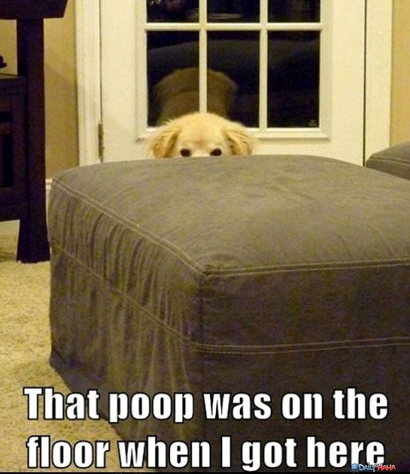 Wasn't mePuppies, Laugh, Animal Humour, Funny Stuff, Poop, Humor, Dogs Owners, Things, Bad Dogs