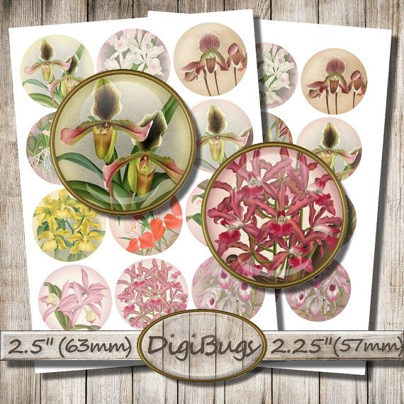 Vintage Orchid Images, Digital Collage Sheet, 2.5 inch, 2.25 inch Circles, Round Orchid Images, Floral Decoupage Paper, Instant Download, b7