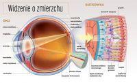 Zaburzenia widzenia zmierzchowego