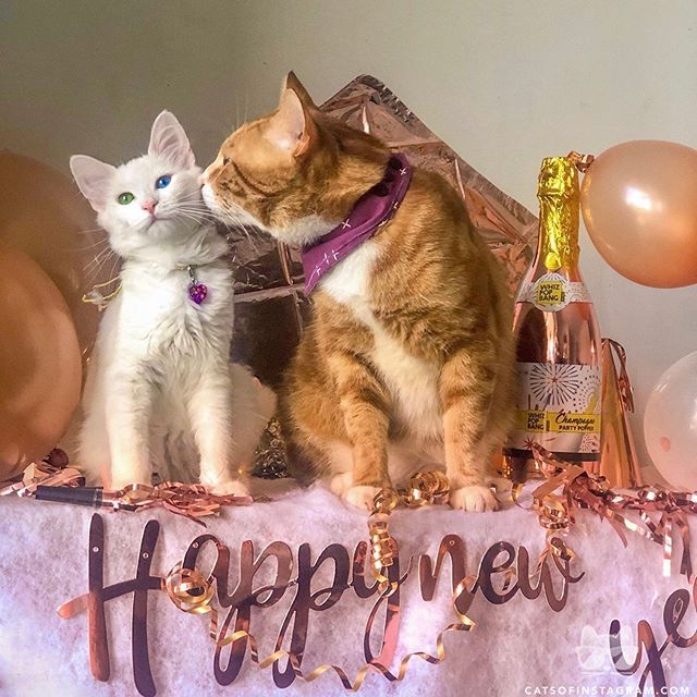 From Skittles And Gingin Happy New Year 2020 Catsofinstagram Feed Generated With Fetchrss Fish Cat Toy Cat Vs Dog Cat Day
