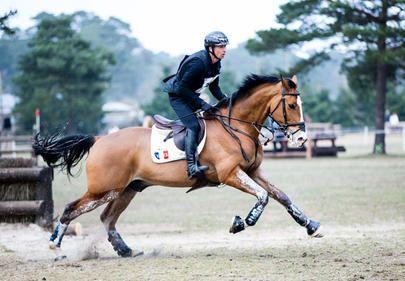 cico 2015 Thibaut Vallette et Qing du Briot - Selle Francais Horse Gelding France Eventing Rio Olympics 2016