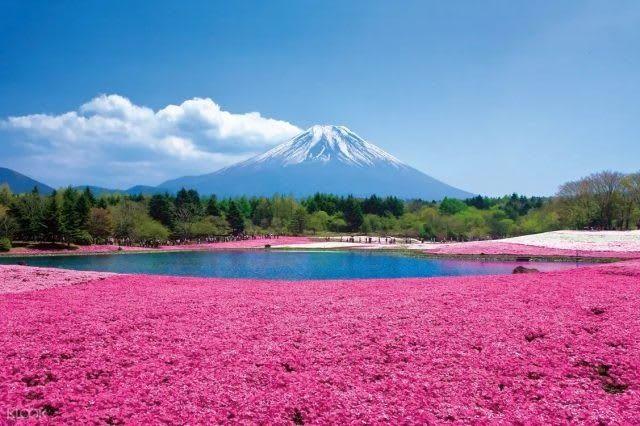 Baru 30 Gambar Pemandangan Gunung Fuji Jepang Perlu Diingat Bahwa Tokyo Adalah Sekitar 100 Kilometer 62 Mil Dari Gunung Di 2020 Pemandangan Gunung Fuji Budaya Dunia