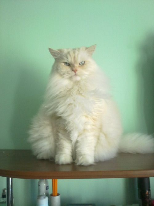 Kitteh is not mad at you, just very very disappointed....