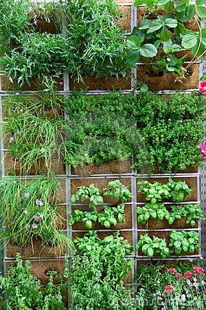 Vertical garden. I want to try this.