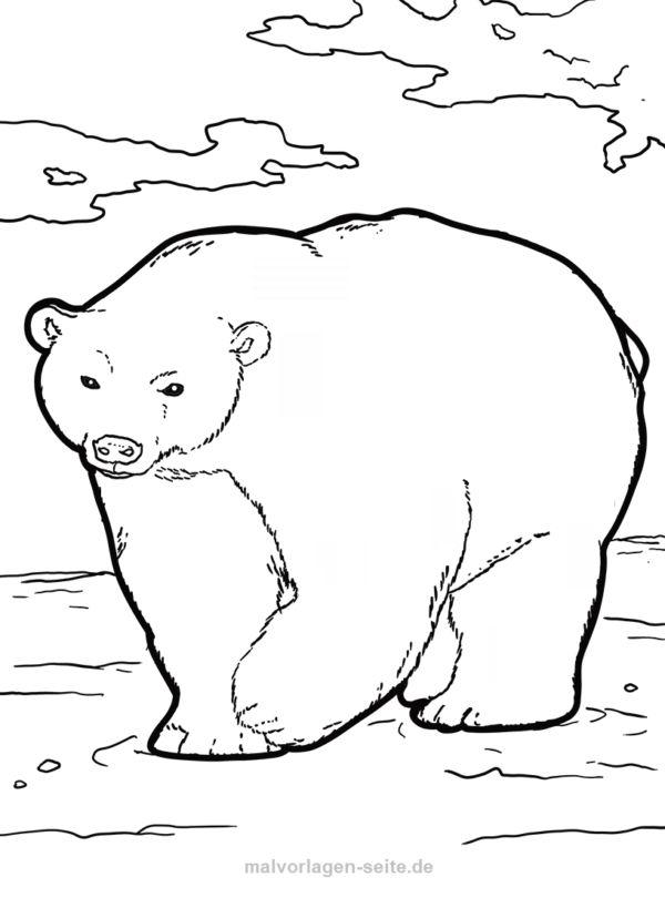 Malvorlage Eisbär   Tiere   Kostenlose Ausmalbilder ...