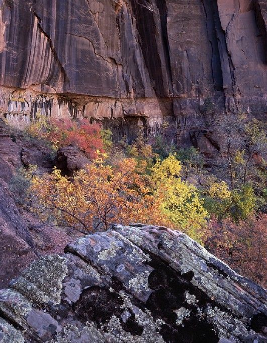 Photographing Fall Foliage in Subdued Light - photo.net