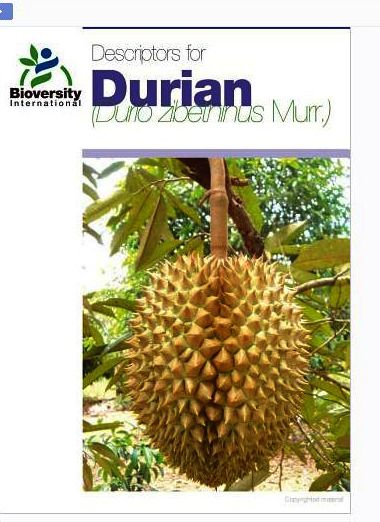 Outline:    Modern Durian  Durian Tree Architecture  Why Prune Durian?  When To Prune Durian  Low-Head Training System (LHTS)  Training and ...
