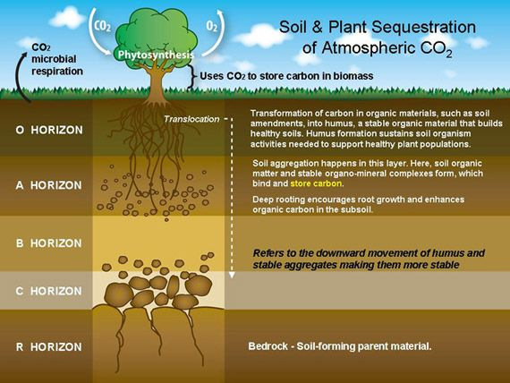 95 best nature environment images on pinterest floral soilcrosssection fandeluxe Image collections