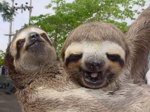 Best Sloths Are My Best Friends Images On Pinterest Sloths - 5 month old baby and sloth are the most unlikely of best friends