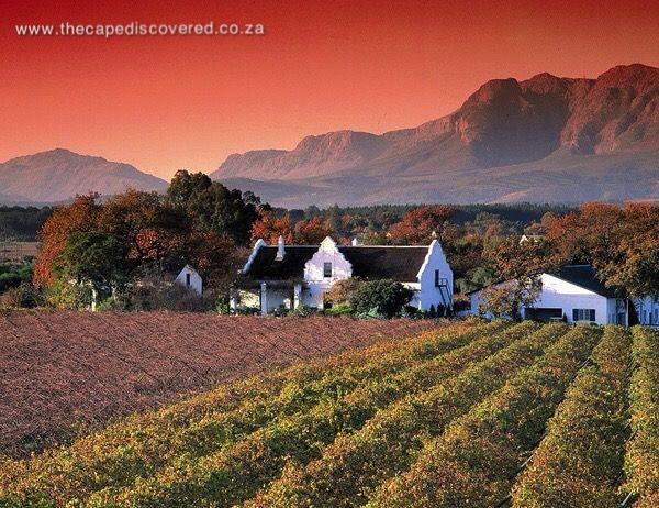 Winelands ambiance