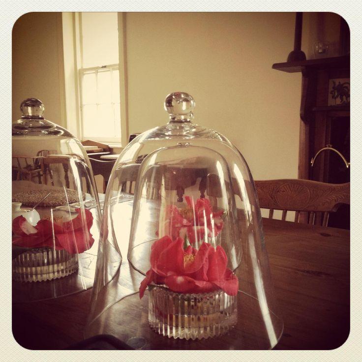 Camellias for breakfast @ The Globe Inn Yass accommodation #bedandbreakfast #camellia #breakfast #guest #VisitYassValley