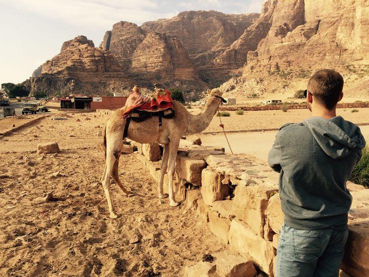 #jordan #camel #planetescape #travelagency