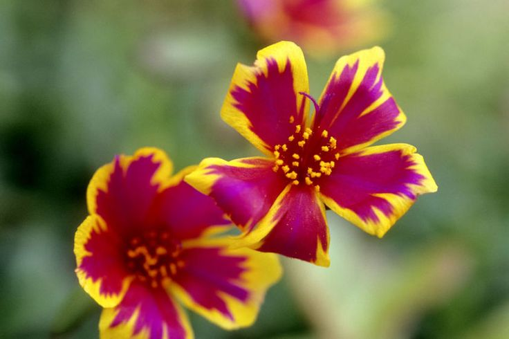 Looking For Alaska Flower: 73 Best Images About Cool Looking Flowers On Pinterest