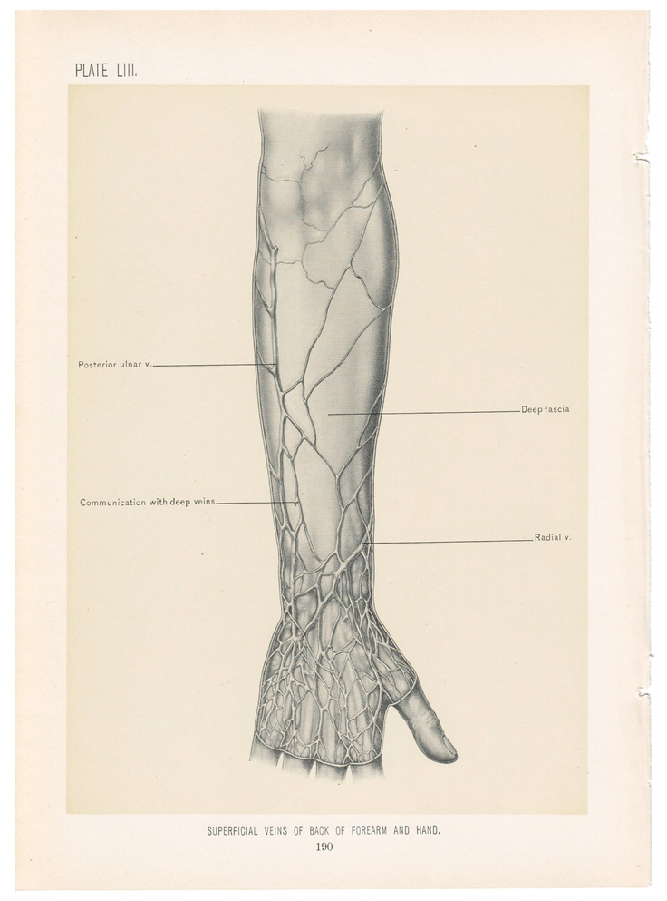 66 best Veins anatomy images on Pinterest | Anatomy, Anatomy ...