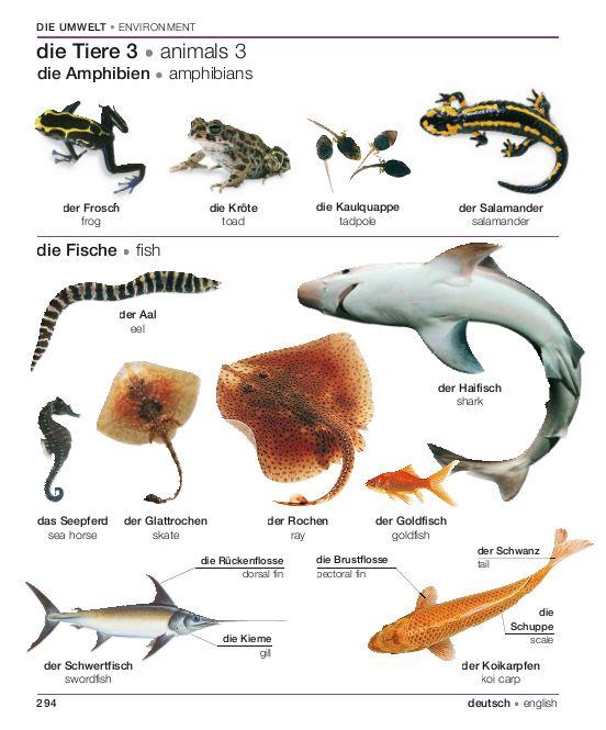 294 - Les animaux : amphibiens et poissons