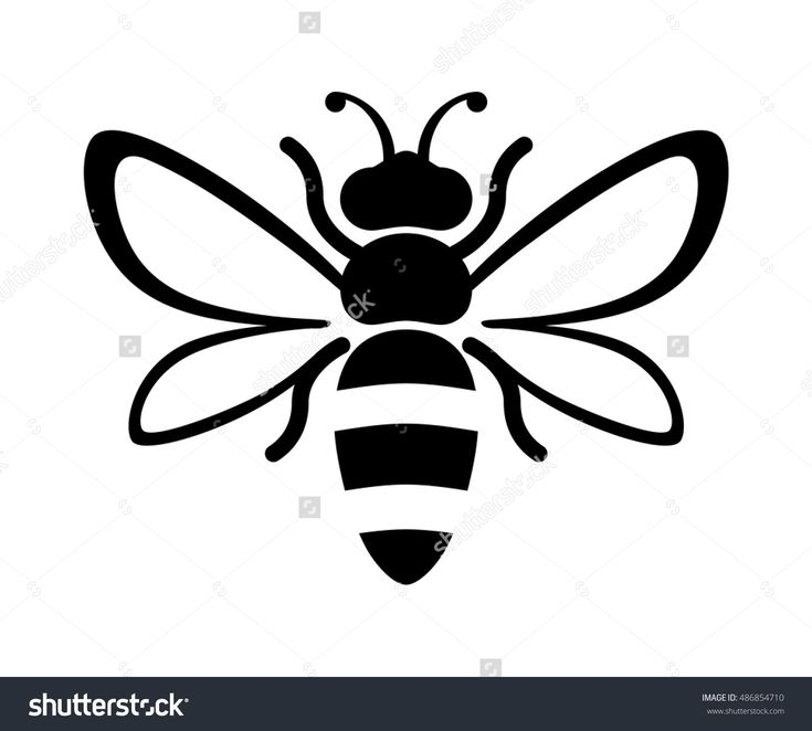 Best 25 honey bee drawing ideas on pinterest bee for Drawing packages