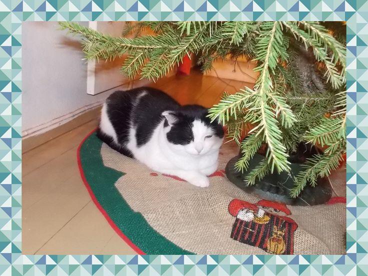 <3 kissa Oskari tykkää olla ja makoila kuusen alla.