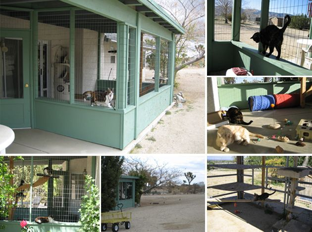 Luxury Screened In Balcony for Cats