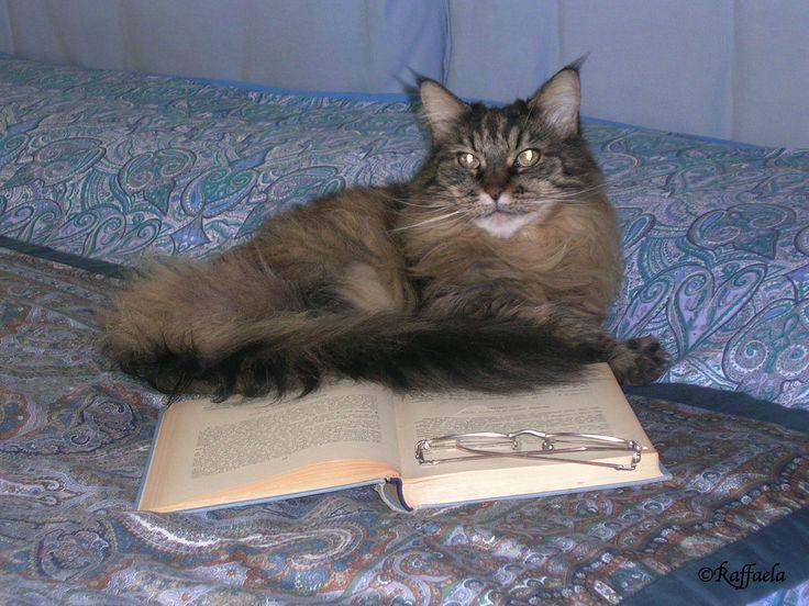 Una lettrice pelosa