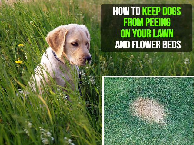 How To Keep Dogs From Pooping In Flower Beds