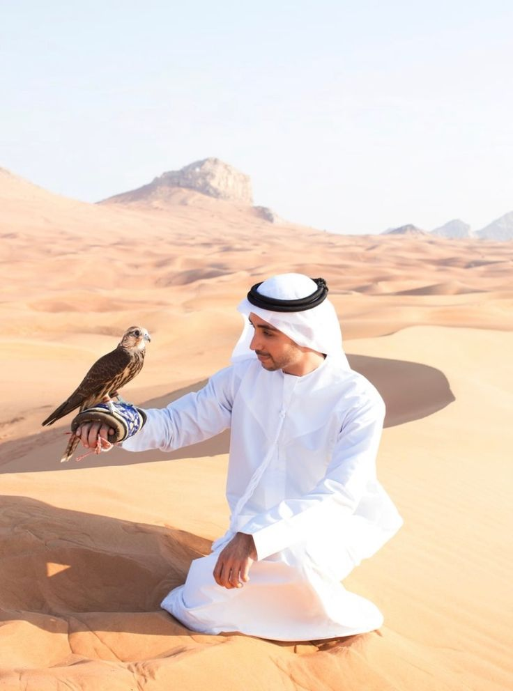 Falcon Hunt - Dubai