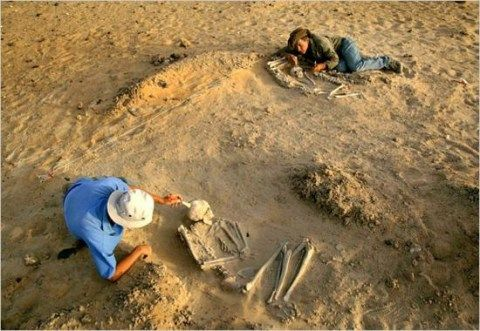 Awesome Careers - Paleontologist