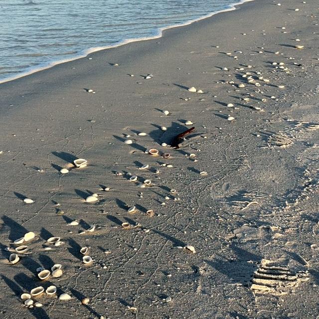 Marco Island Beaches: Marco Island Beach, Marco Island, Island Beach