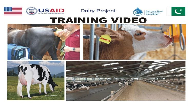 Training Video: Vaccination, Silage Plan, Feeding, Shed Design, Calf Rea...