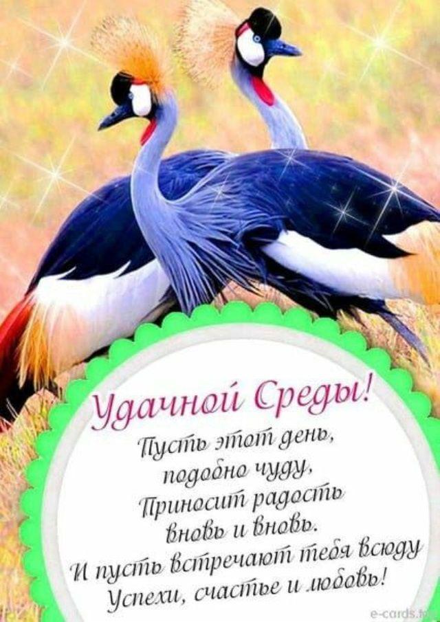 Kartinki Udachnoj Sredy 43 Foto S Izobrazheniyami Dobroe Utro