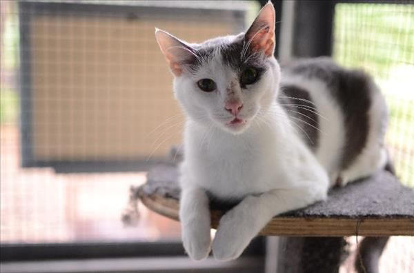 Hi there, I'm Lemonade from Townsville. Like my name suggests, I'm super sweet! I'd love to meet you, pop in to see me today! http://bit.ly/2quk5TY