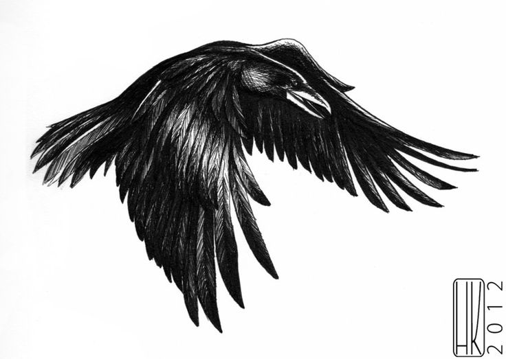 how to keep ravens away