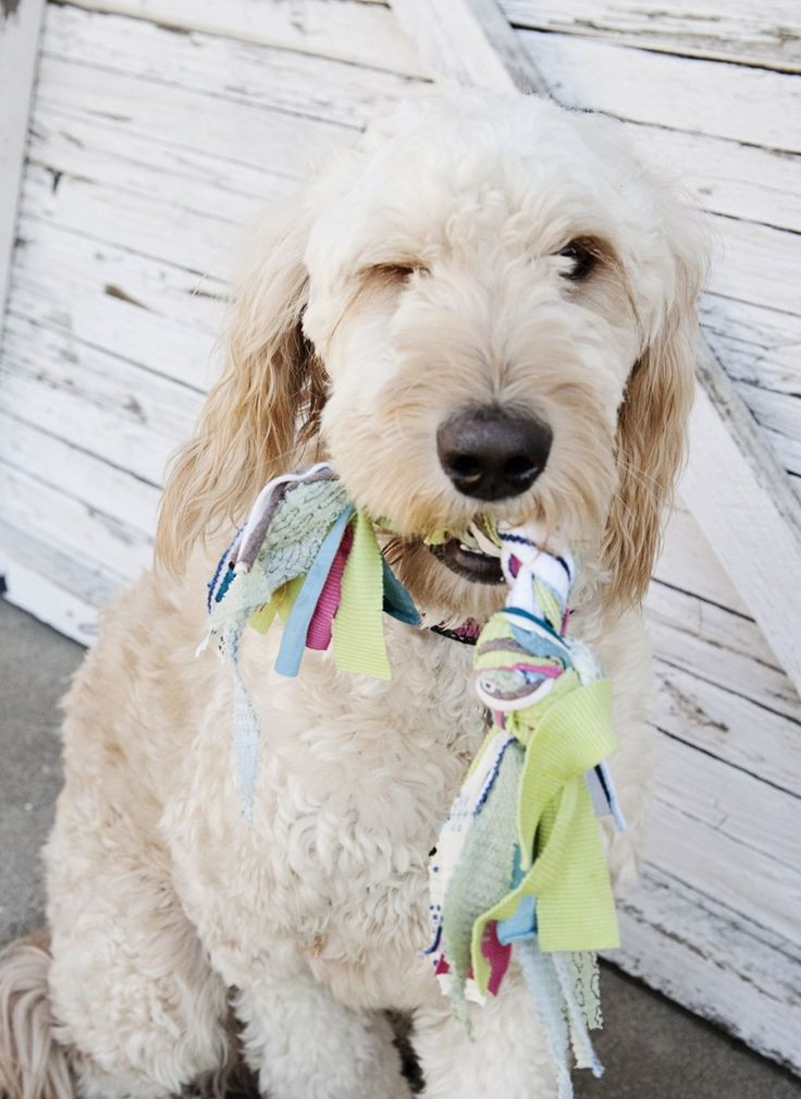 16 best brownie a world of girls pets badge images on for T shirt dog toy