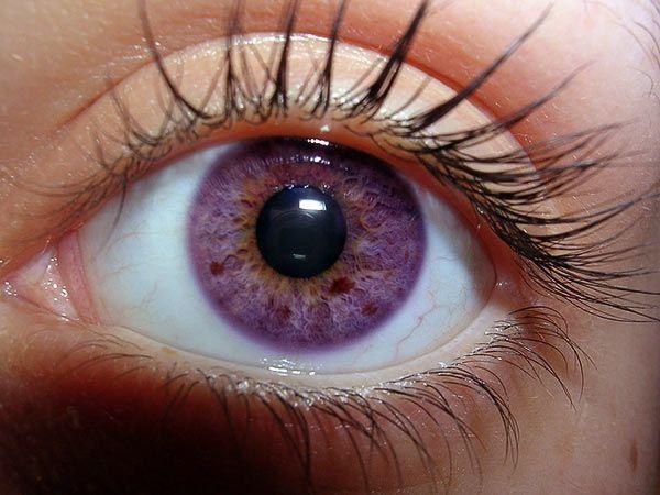 natural violet eyes - Pesquisa Google