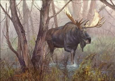 Cool moose pic