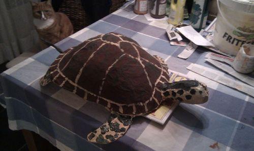 surprise schildpad