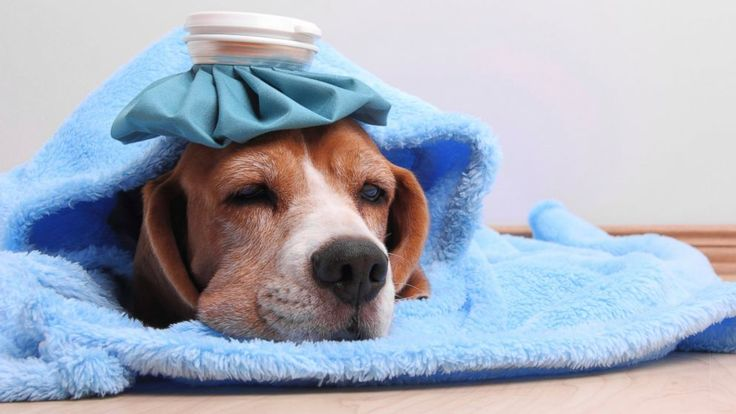 PHOTO: Chicago has seen over 1,000 cases of canine flu in the past few weeks.