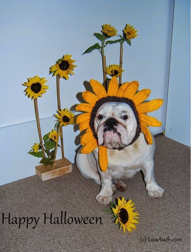 Free Crochet Patterns For Dog Halloween Costumes 86 Best Images