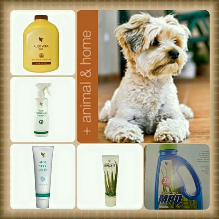 So who's a Horsey lover and have thier own horse? Who likes treating their pets to a pamper too. Did you know that our products are so versatile that animals too can use them ..... Yes they can have the drinking gel, use the Aloe Gelly, the soap, deodorant, even the tooth paste and lots more. We even have one of the top vets on our board who treated the Olympic horses with our very own Aloe Vera Amazing stuff http://www.flpsimplicity.flp.com/