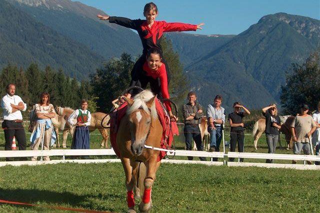 Südtiroler Haflinger Pferdezuchtverband - Noriker Südtirol Pferdemarkt Pferdezucht Pferdeverkauf Veranstaltungen Reiten Pferde Rasse Zucht Hengste Stuten Fohlen Geschichte Provinz Bozen Deckhengste