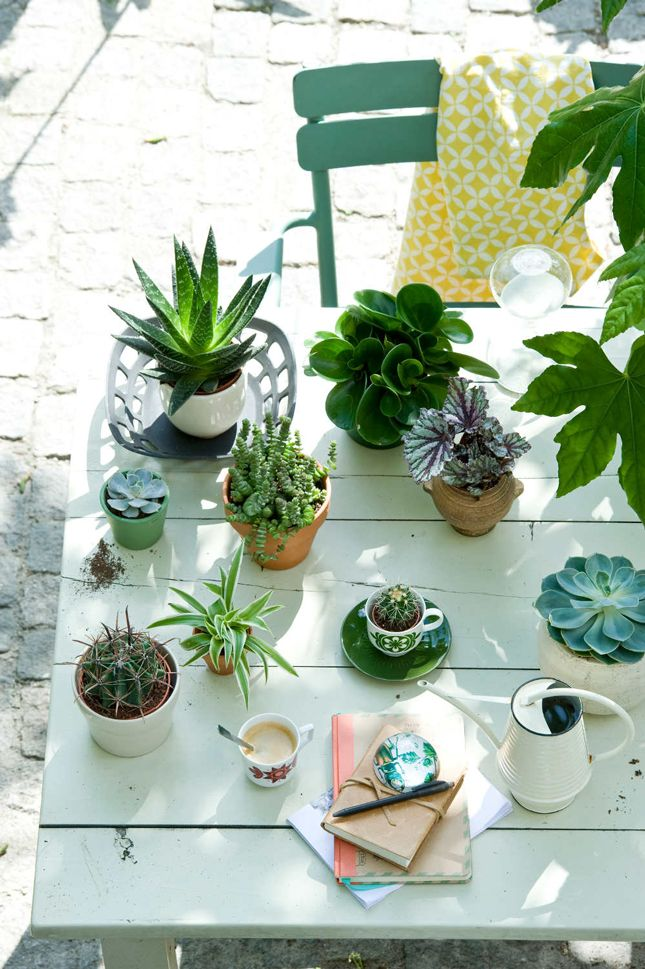 Watering Your Houseplants, with some good tips about cacti and succulents