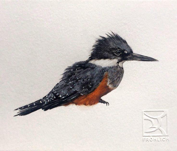 MARTÍN PESCADOR Chilean bird in Watercolor Lorena Fröhlich Mohr