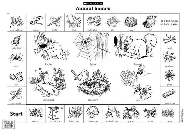 animal habitats printables lesson where animals live nature detectives pinterest. Black Bedroom Furniture Sets. Home Design Ideas