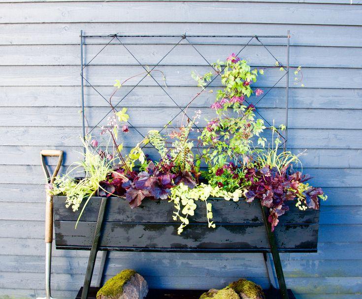 25 b sta penningblad id erna p pinterest skuggtr dg rd blommor tr dg rd och tr dg rdsdesign. Black Bedroom Furniture Sets. Home Design Ideas